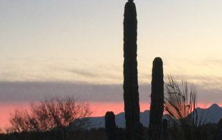 Nature, Wildlife, Explore Loreto, Loreto Destinations, Gretchen Bell