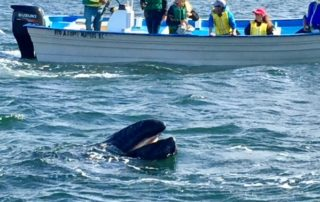 Whales, Pacific Side, Loreto