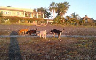 Adopt a Loreto Dog, Explore Loreto, Loreto Destinations, Gretchen BellA