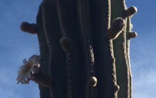 Desert of Loreto, Explore Loreto, Loreto Destinations, Gretchen Bell